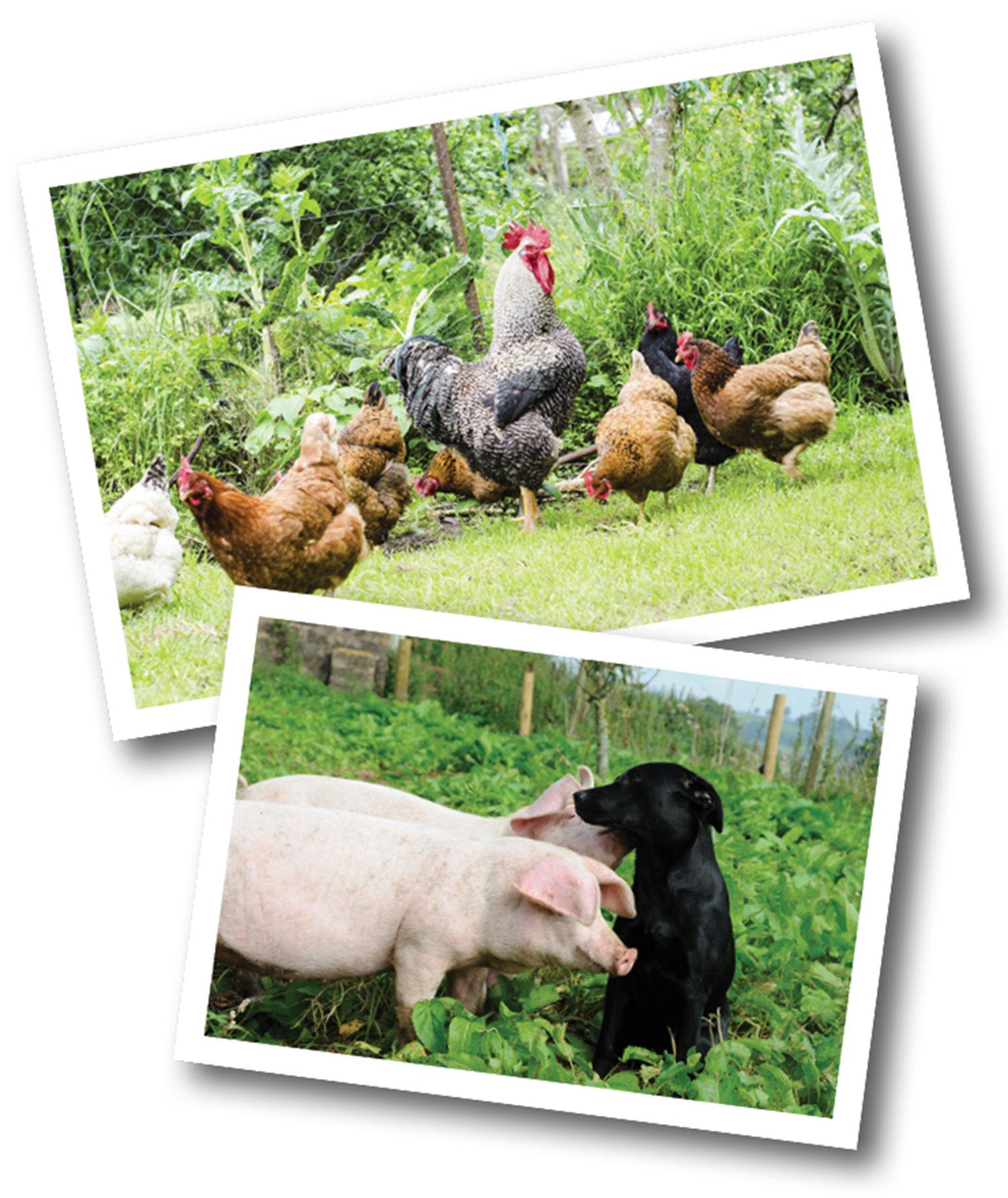 Feed & Pet Food